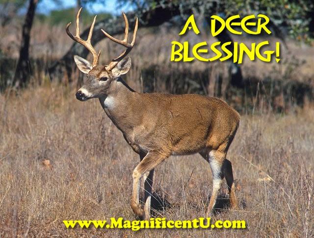 A white tail deer buck visits the back yard - deer medicine