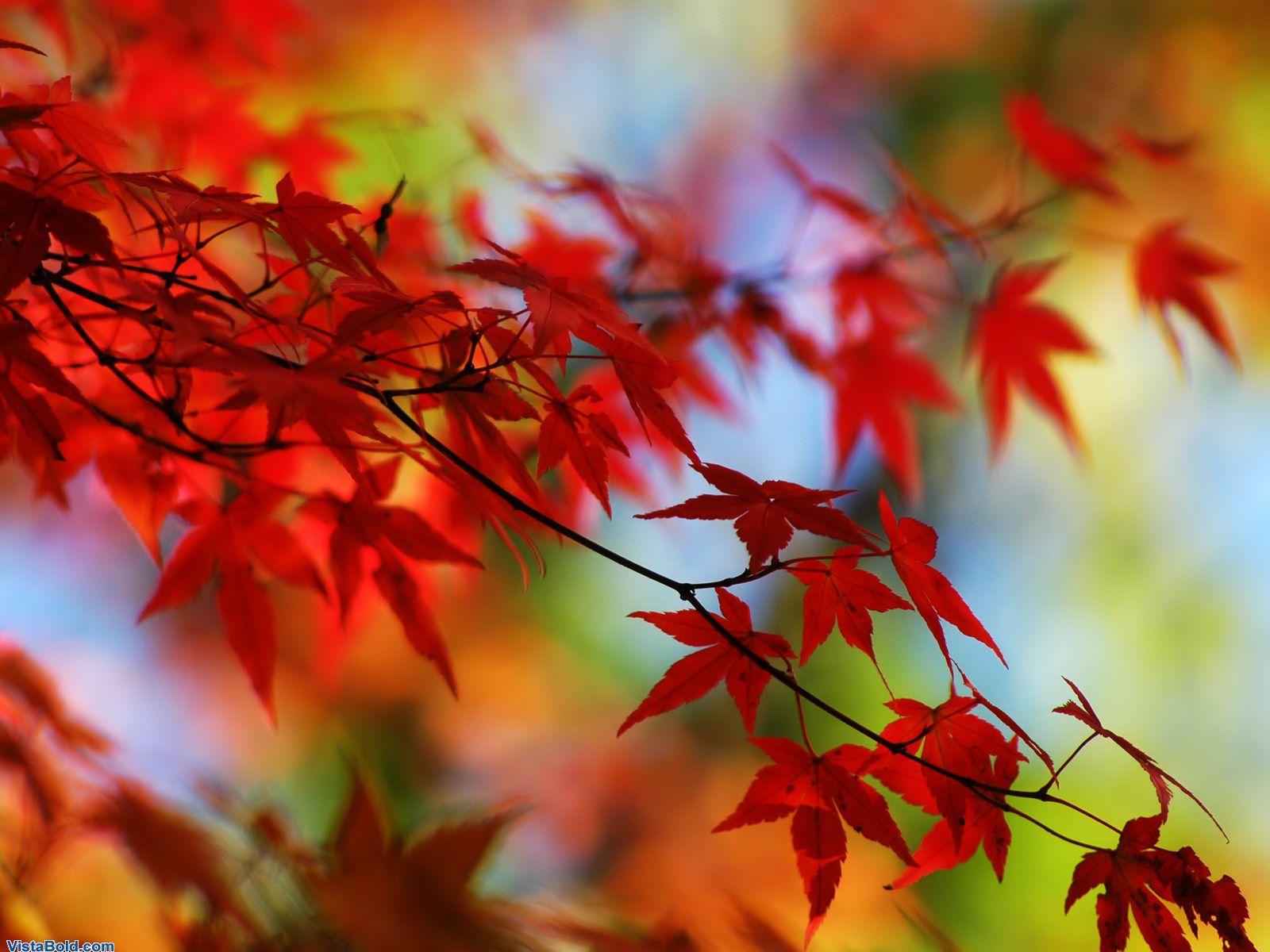 The best top autumn desktop wallpapers 15 En Güzel Sonbahar HD Duvar Kağıtları