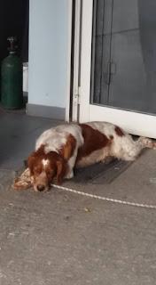 Βρεθηκε το σκυλάκι της φωτογραφίας στην Νεα Κηφισια. Το αναζητά κανείς?