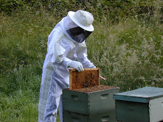 honey bee keeping