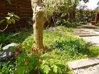 落ち着いた お庭は 春の目覚め ...