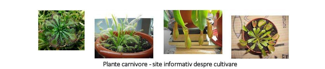 Plante carnivore - site informativ despre cultivare
