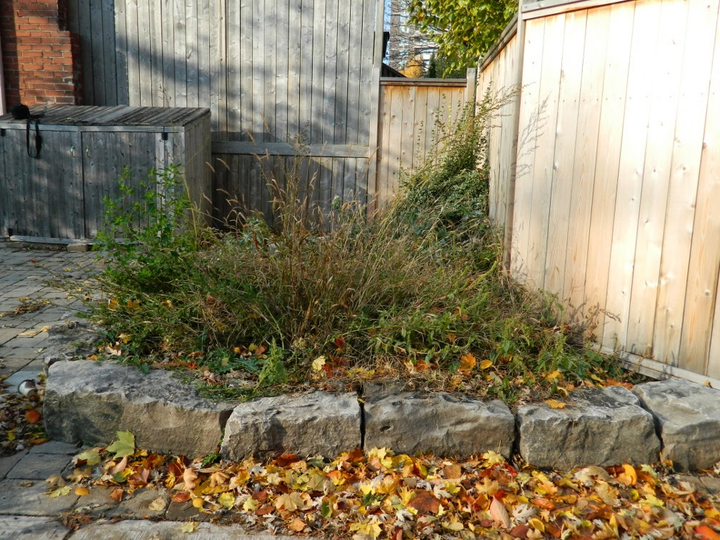 Toronto garden cleanup before Broadview North by Paul Jung Gardening Services
