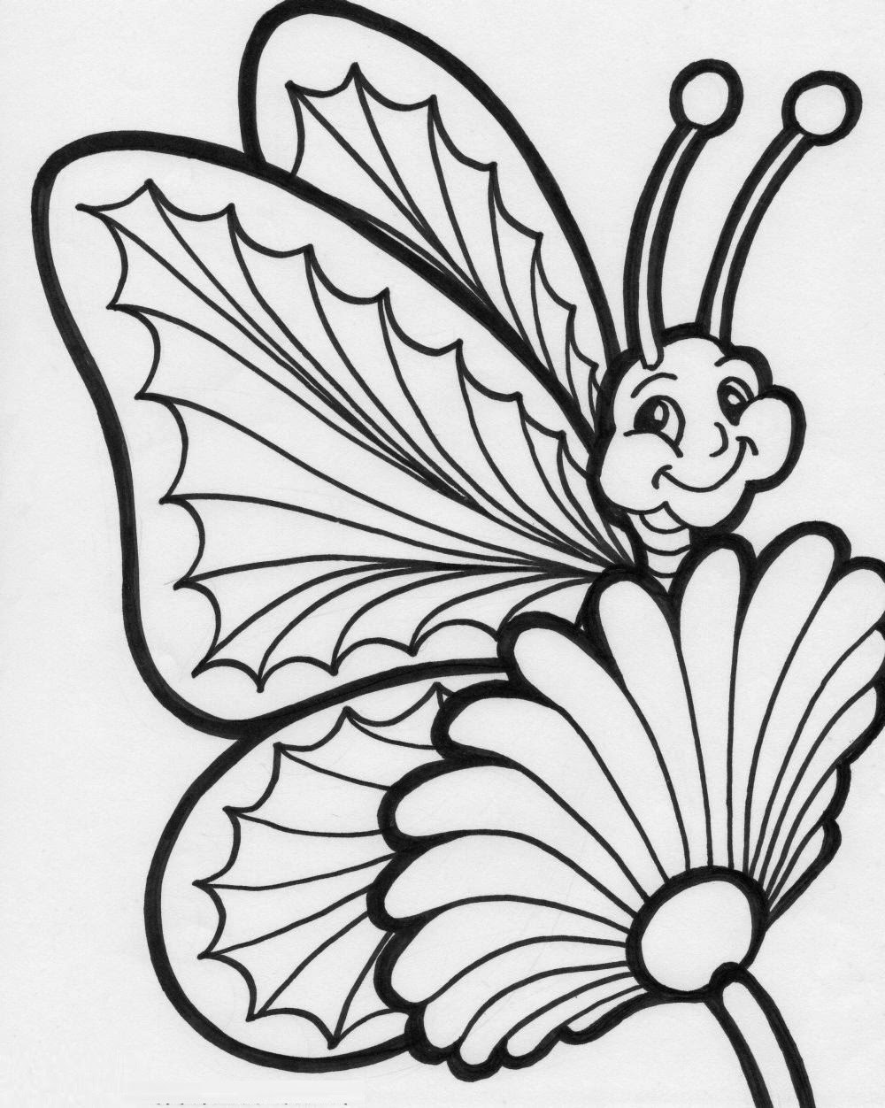 coloring pages of butterflies for adults - colours drawing wallpaper beautiful colour butterflies