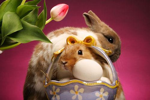 Wallpaper de huevos y conejos de pascua - Easter Bunnies