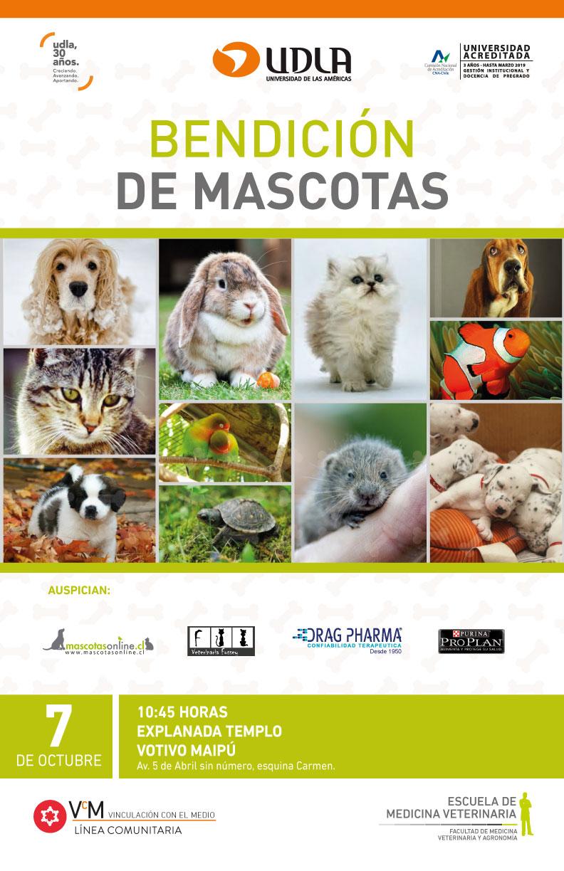 Bendición de Mascotas 7 de Octubre 2018