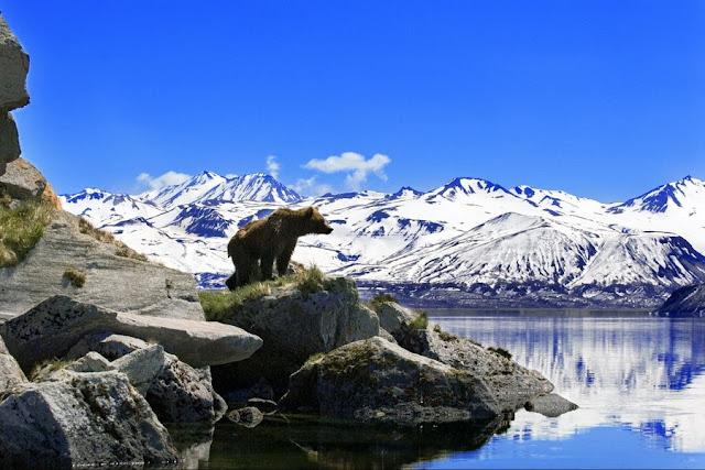 красивые фотографии диких медведей