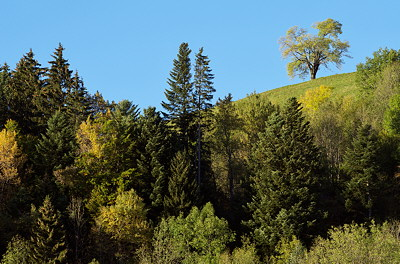 Photograph of some trees in alpine meadows