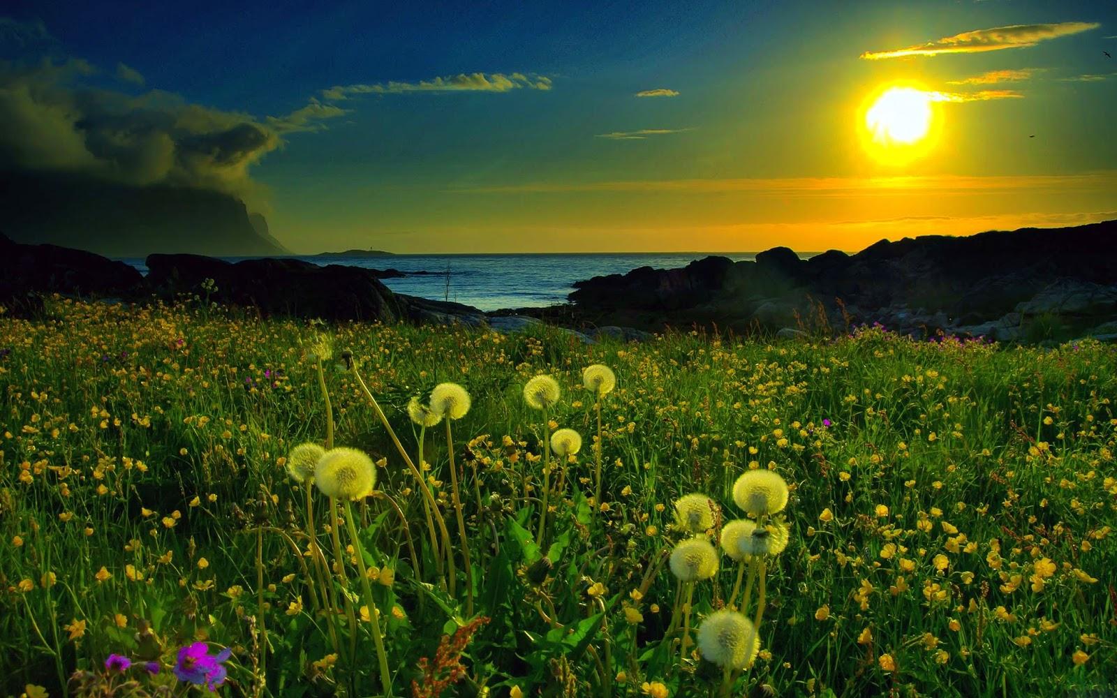 sun set spring