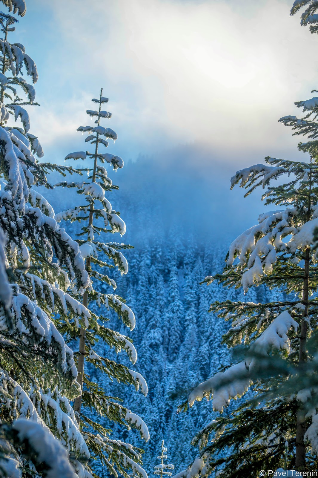 Погода в эти выходные выдалась чудесная. На солнце снег искрится будто россыпь миллионов крошечных алмазов.