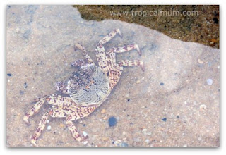crab in rockpool