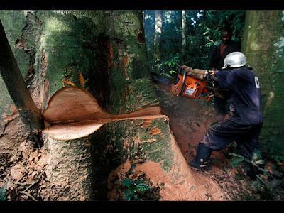 tala de arboles+medio ambiente+desforestacion+ecologia