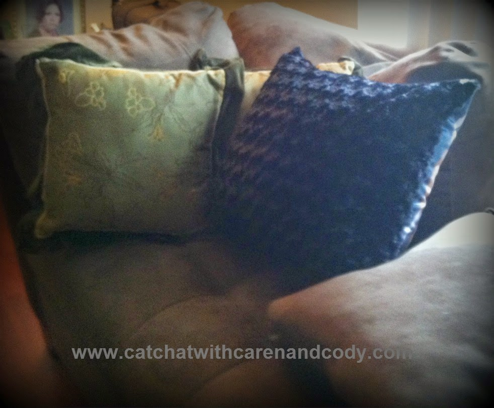 cat chat with caren and cody custom body pillows are the. Black Bedroom Furniture Sets. Home Design Ideas