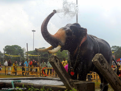 Elephant's Bath - Thrissur