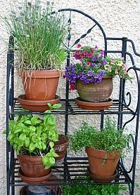 Gartentipps und Gartenberatung - schnell verfügbar dank Online-Gartenlexikon