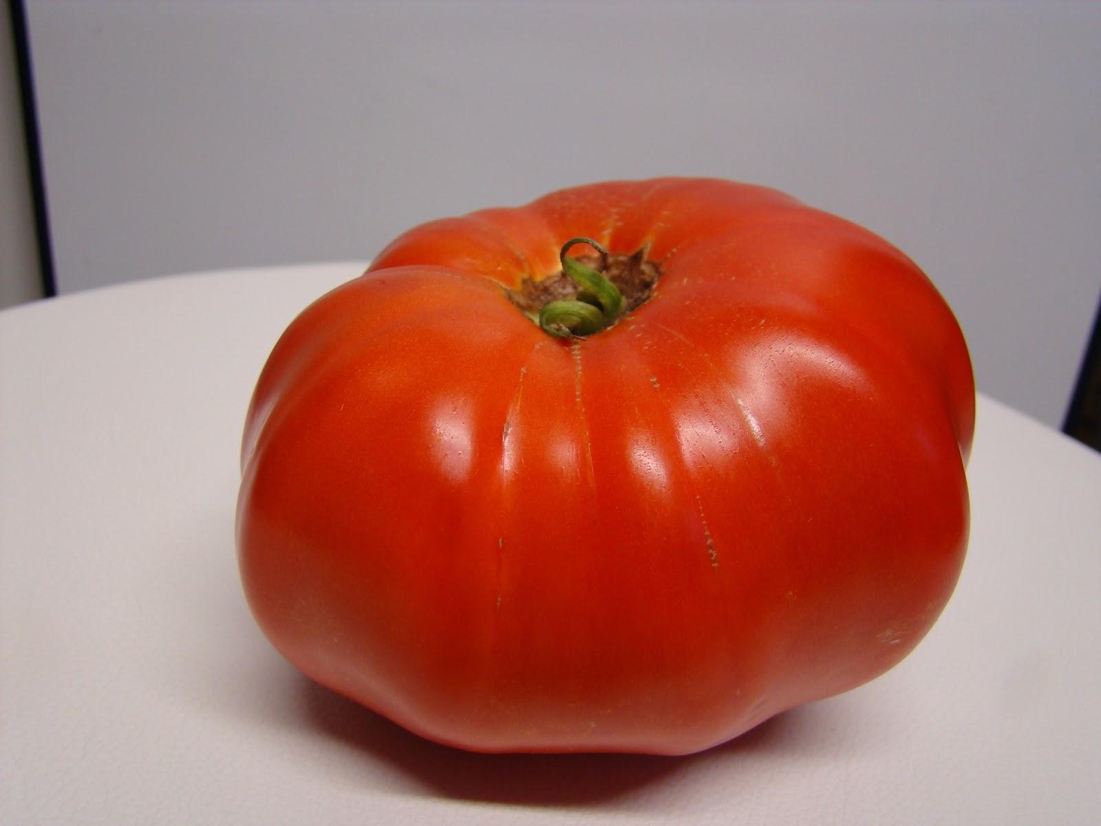 Ancienne variété tomate troc plantes