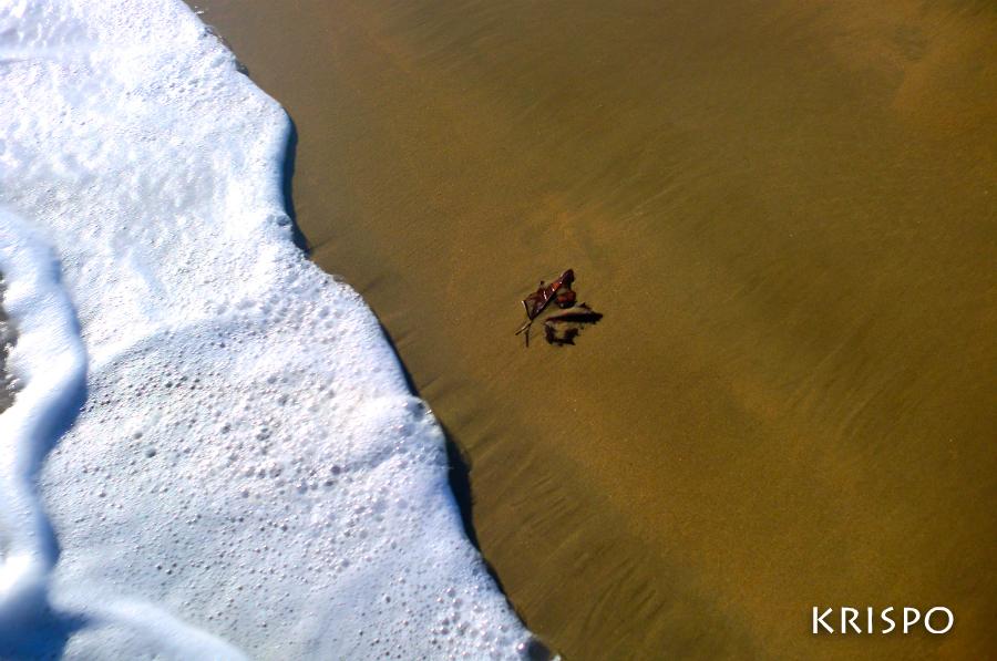 una hoja a la orilla del mar
