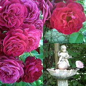 my french rosegarden