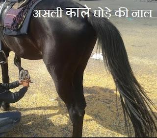 original Black Horse Shoe  काले घोड़े की नाल