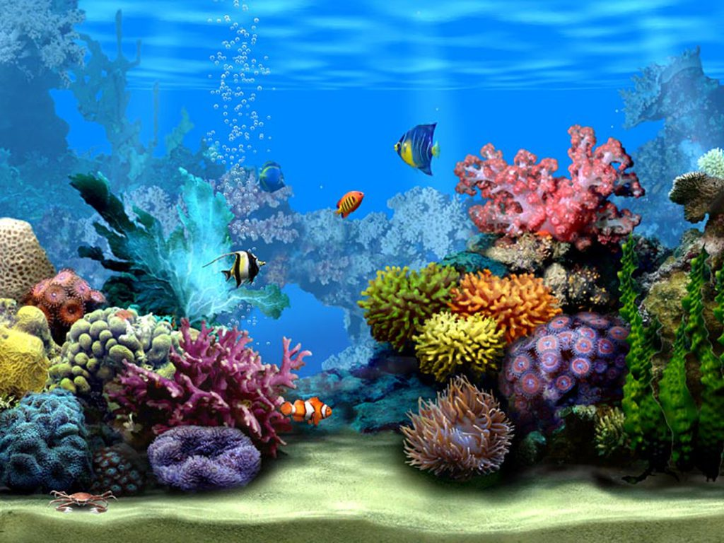 http://1.bp.blogspot.com/-No02ra4cXIw/UCGDPhG4LYI/AAAAAAAABDU/LkZH9dsIhbA/s1600/Sea-Life-Wallpaper%2B2.jpg