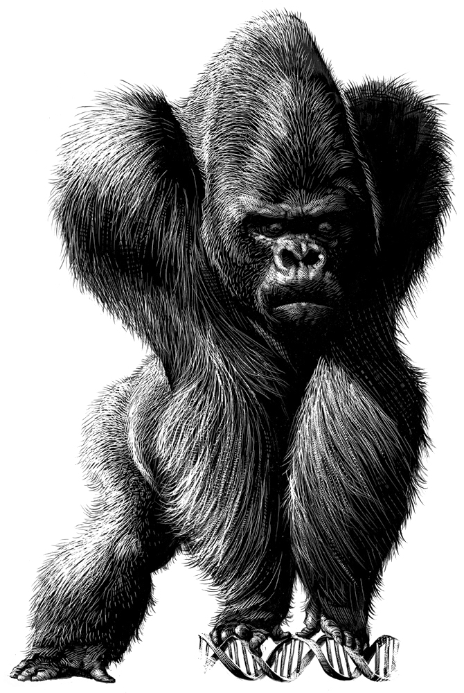 14-Gorilla-and-DNA-Ricardo-Martinez-Wild-Animals-inside-Scratchboard-Drawings-www-designstack-co