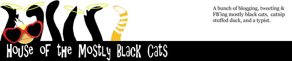 House of the (Mostly) Black Cats