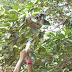 Bombeiro da Brigada do Pantanal -  Nobres Dicas do  Pantanal