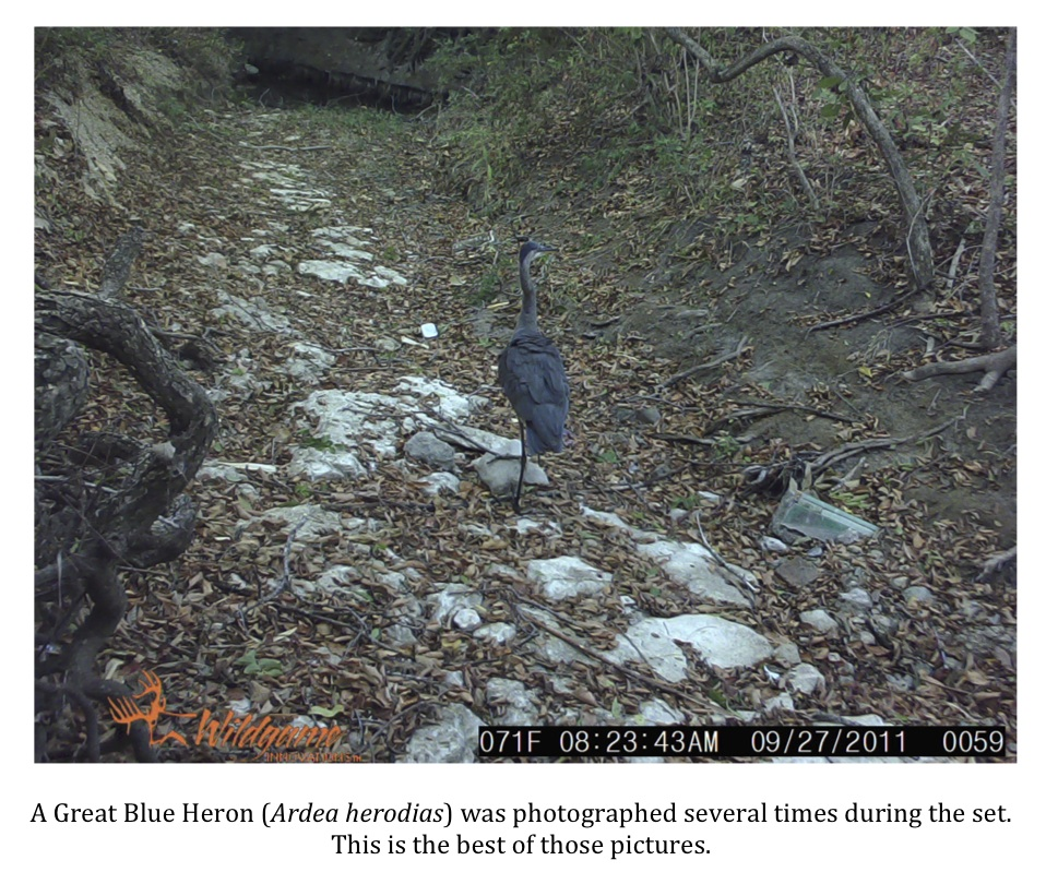 texas cryptid hunter: bell county camera project update
