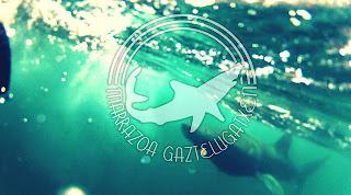 Tiburon Peregrino Sanjuan de Gaztelugatxe