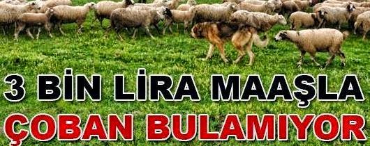 çoban iş başvurusu