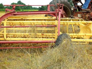 raking hayfield 6