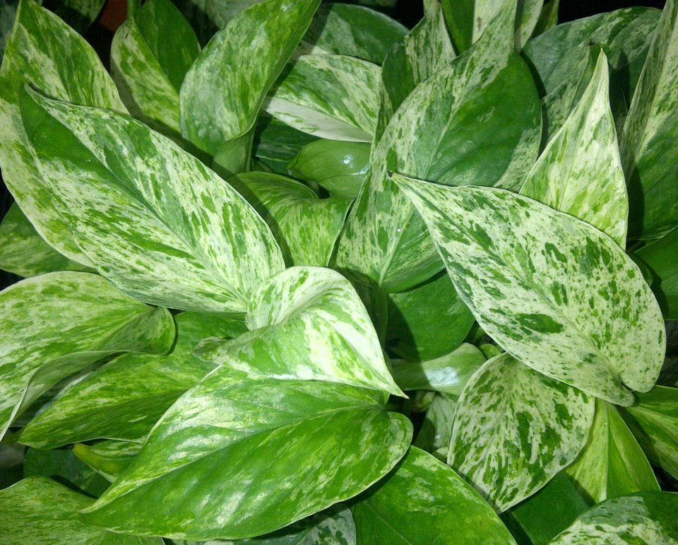 502 bad gateway - Best indoor plants for low light ...