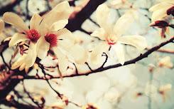 Ya llegó la primavera.