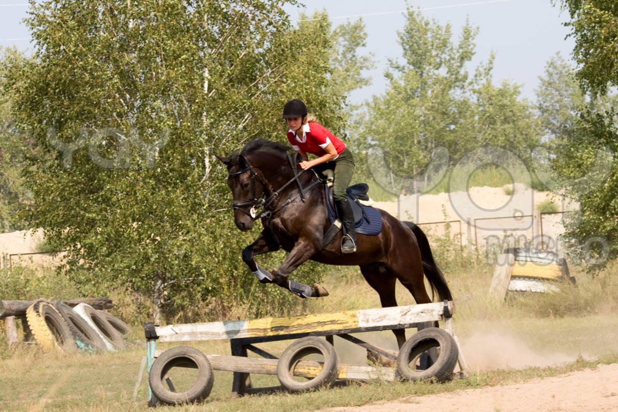 Black horses jumping - photo#21