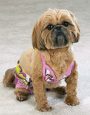 Funny Photos of Dogs in Bikinis