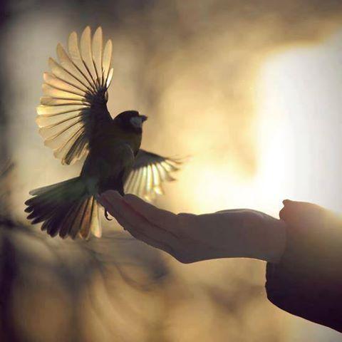 'Melhor um pássaro na mão'...