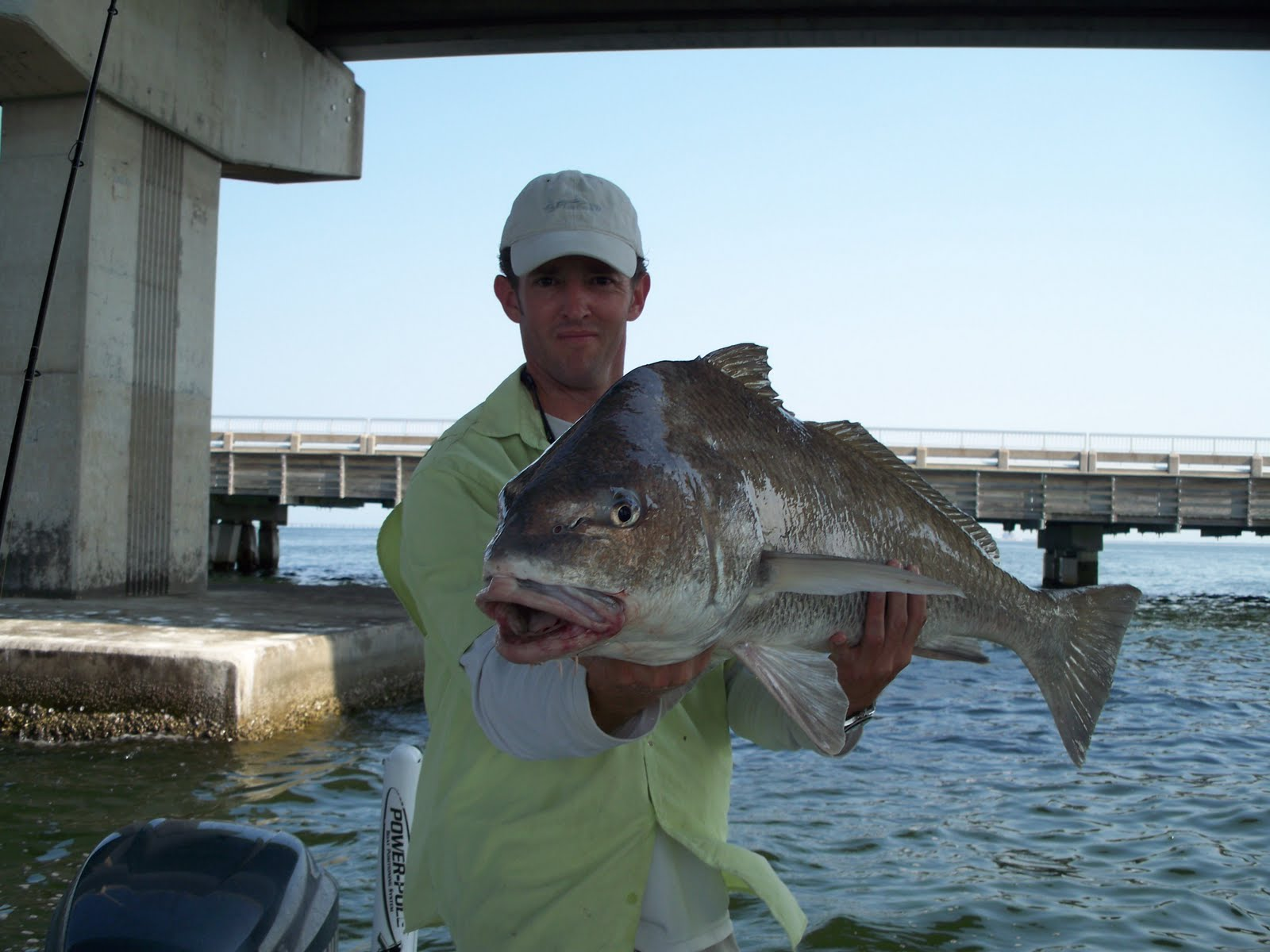 Florida fishing guides fishing reports saltwater boat for Saltwater drum fish