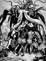 Árboles devoradores de humanos Arbre_anthropophage_madagascar