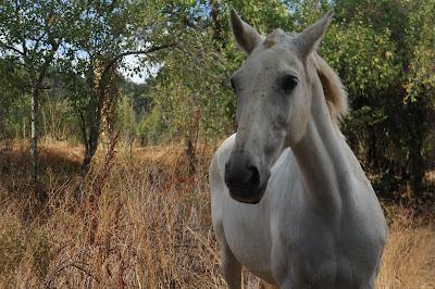 Senderismo en Sierra de Aracena: De Santa Ana la Real a Alajar