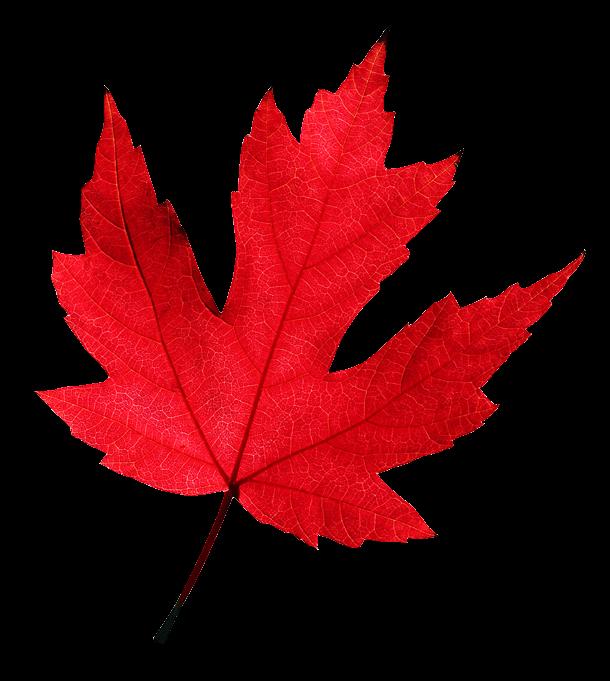 Писаки 2 0 клипарт осенние листья 3