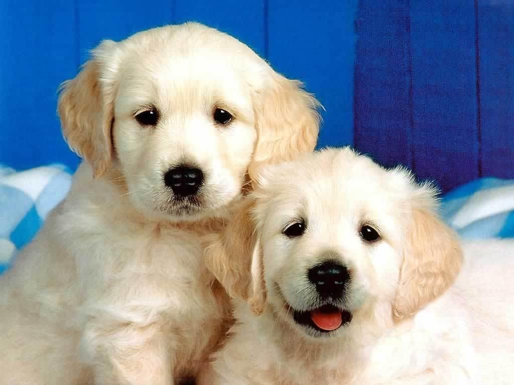http://1.bp.blogspot.com/-Nq4Em1bnueQ/Ti1TnLHikHI/AAAAAAAAAUo/YIBsw-54Fso/s1600/Puppies-3-dogs-1993812-1024-768.jpg