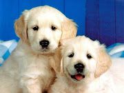 Two Puppies Photo Dog Wallpapers Backgrounds