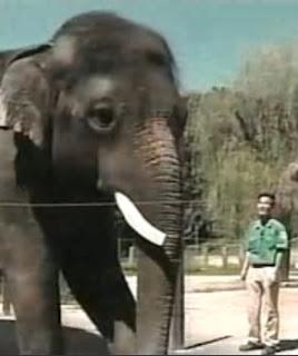 gajah unik - koshik