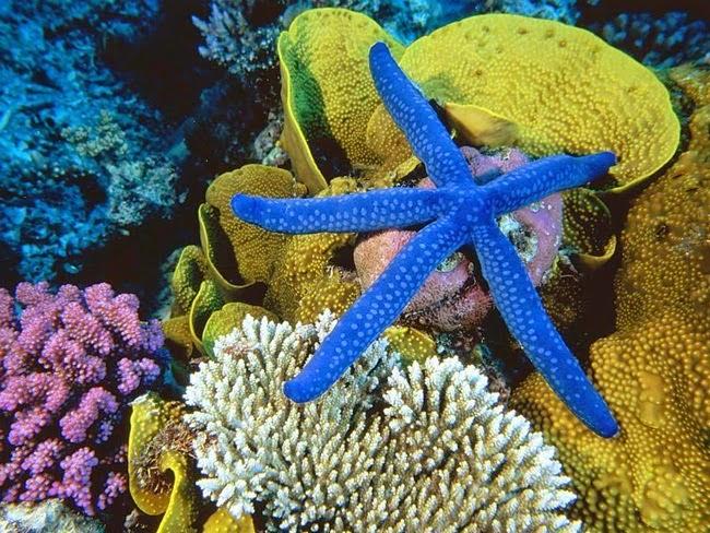 أجمل الأسماك الاستوائية الملونة   - صفحة 2 Colorful-tropical-fishes-13