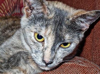 kitten face Dora