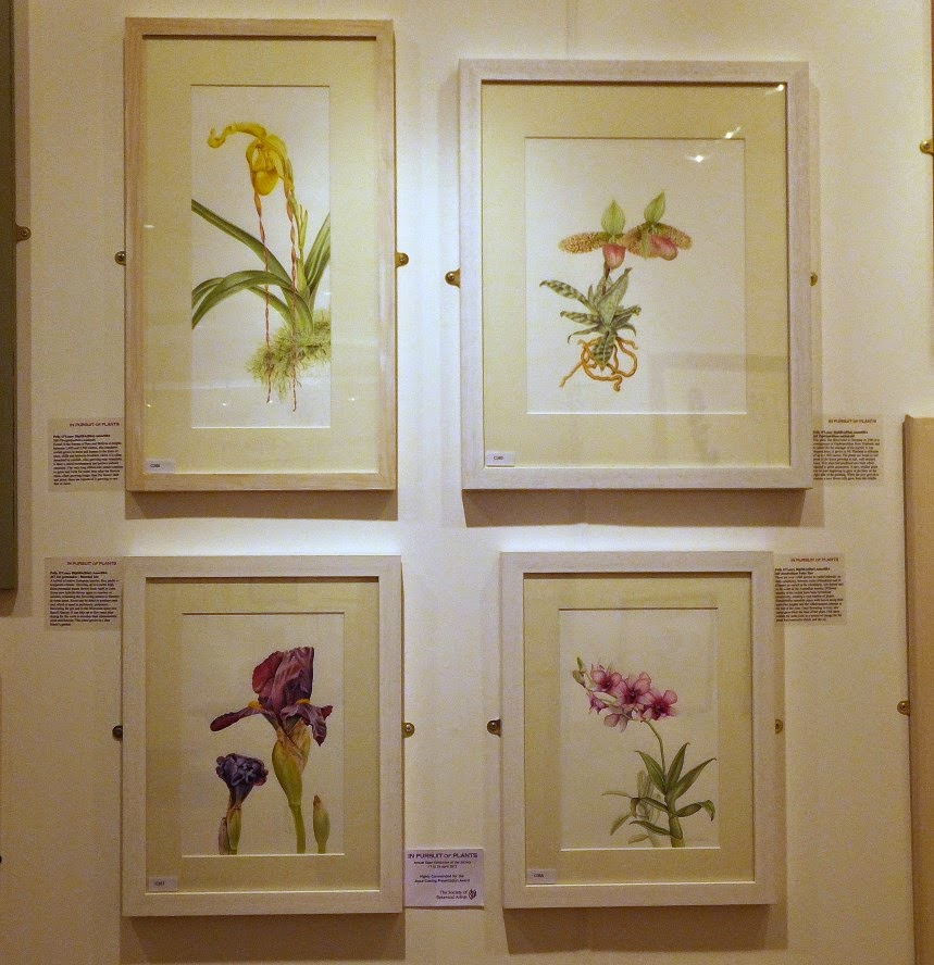 society of botanical artists - highly commended Joyce Cumming Award
