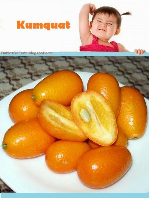 Baby Kumquat