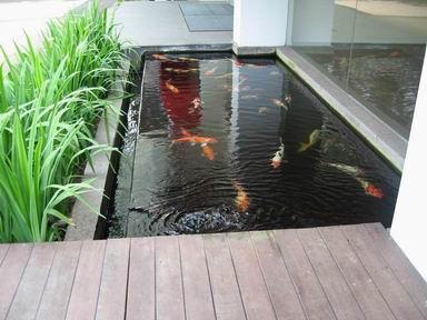 Membuat kolam ikan didalam rumah kumpulan tips untuk bunda for Modern koi pond ideas