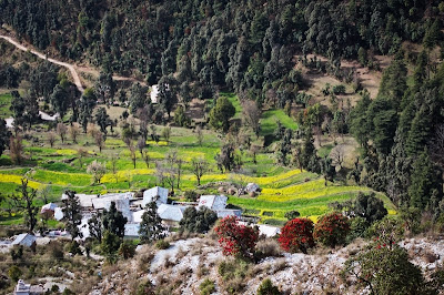 Stunning valley vistas, trek to Triund - Dharamsala