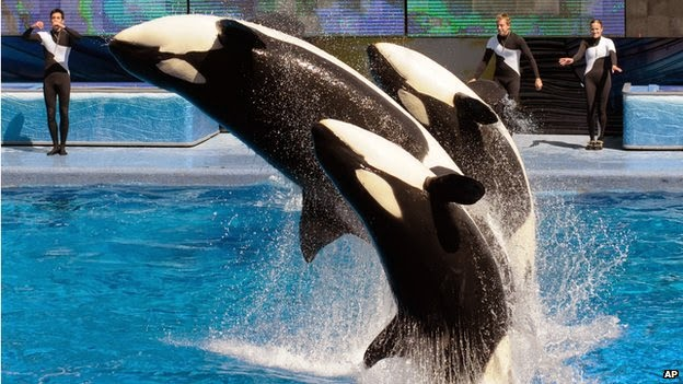 SeaWorld park to redesign controversial whale tank